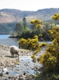 Around Derwent Water