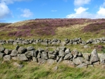 Stone wall and heather, West Lomond Hill