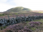 Moor and purple heather, West Lomond Hill