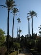 Palmtrees at the Alcazar